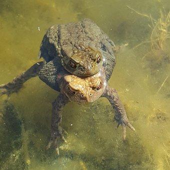 Turtle, Pond, Habitat, Animal World, Hidden, Rest