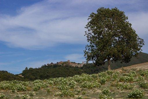 Tuscany, Landscape, Wide, Castello Di Ginori Querceto