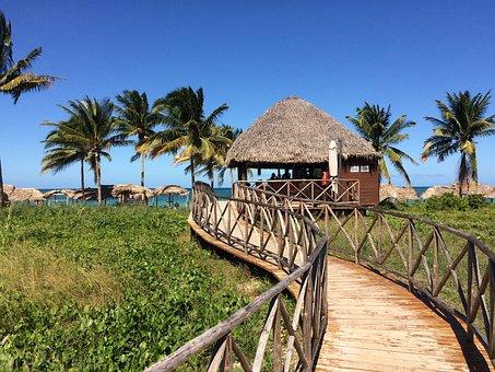 Cuba, Palm Trees, Beach, Holiday, Caribbean, Cayococo