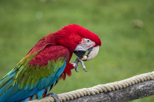 Parrot, Tropical, Bird, Macaw, Colorful, Wing, Color