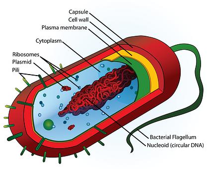School, Education, Science, Diagram, Cell, Cartoon
