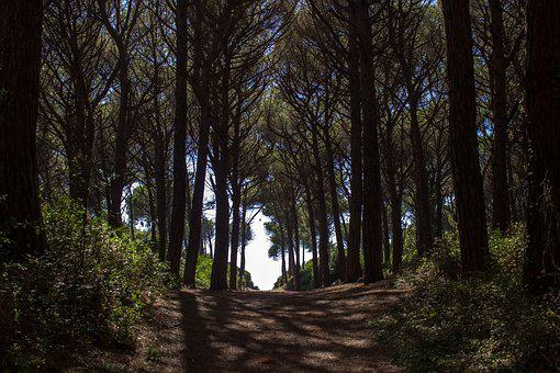 Pine Forest, Away, Forest Path, Passage, Forest, Nature