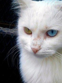 Animal, Pet, Cat, Cute, Puppy, White, Nature, Friend
