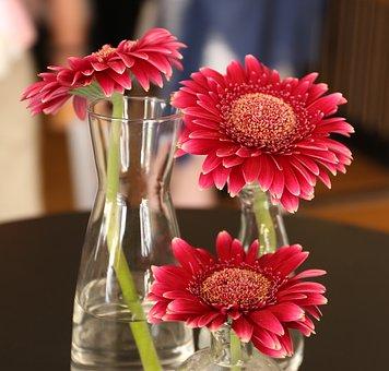 Flowers, Gerbera, Flower, Colors, Vase