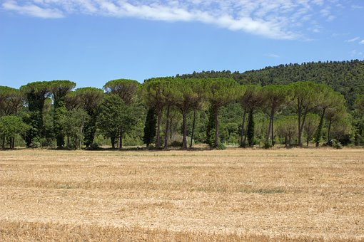 Tuscany, Querceto, Landscape, Forest, Fields, Mood