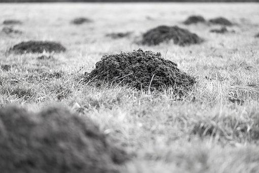 Molehill, Mole, Earth, Hill, Meadow, Black And White