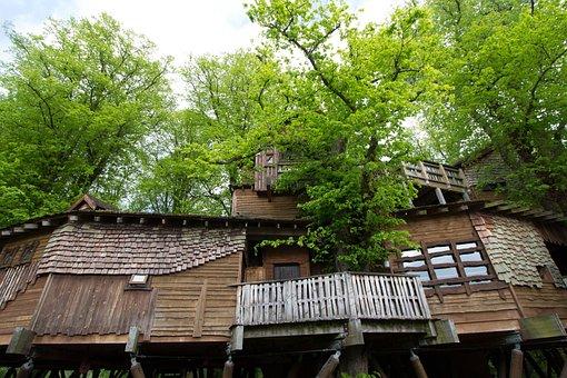 Treehouse, Alnwick, Northumberland, Tree, House, Uk