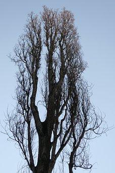 Poplar, Tree, Branches Sky, Blue, Green, Autumn, Plants
