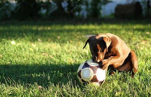 Puppy, Dog, Animal, Backyard, Outside, Summer, Morning
