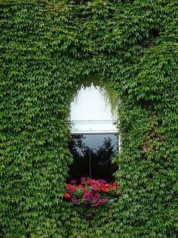 Window, Creeper, Flowers, Reflection, Green, Building