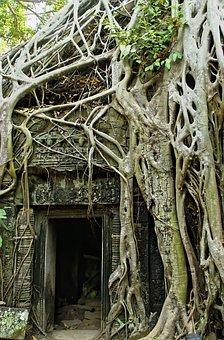 Cambodia, Angkor, Angkor Thom, Temple, Ruins, Lianas