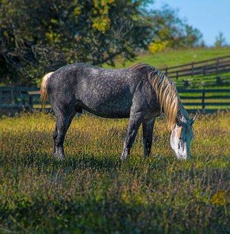 Horse, Spotted, Mane, Nature, White, Black, Green