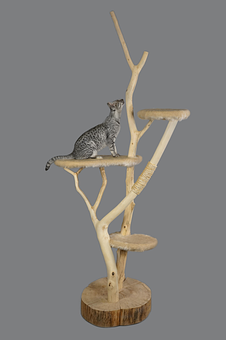 Cat Furniture, Cat, Scratching Post, Cats, Of Course