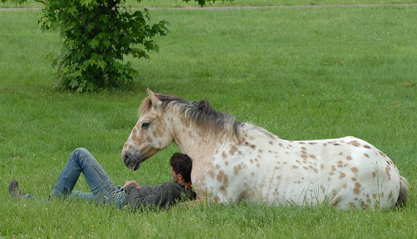 Horses, Colts, Animals, Equine, Foal Resting, Nature