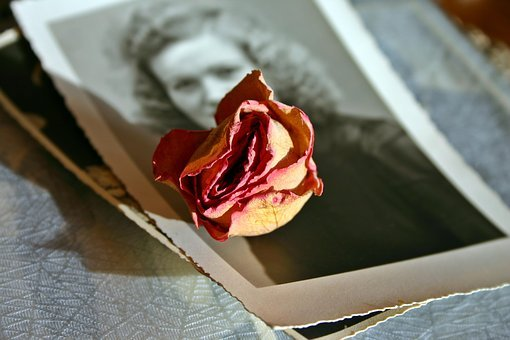 Memory, Photo, Rose, Blossom, Bloom, Flower, Dried
