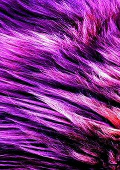 Foux, Fur, Purple, Material, Fashion