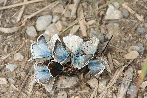 Butterflies, Blue, Group, Earth, Nature, Wings, Insect