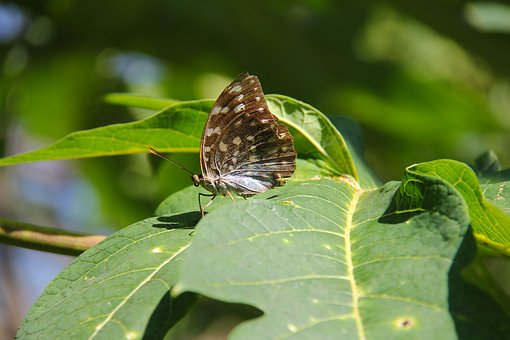 Luang Prabang, Laos, Unesco Heritage, Butterfly