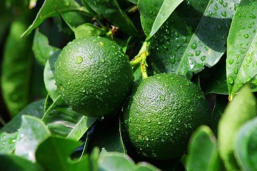 Lime, Orange, Food, Citrus, Fresh, Fruit, Healthy