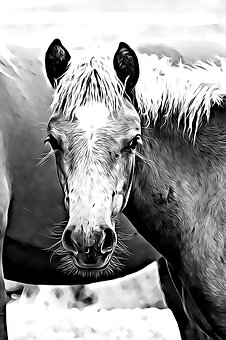 Digital, Graphics, Horse, Foal, Mane, Eye, Is Watching