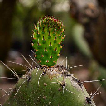 Mexico, Cactus, Plants, Texture, Garden, Nature, Green