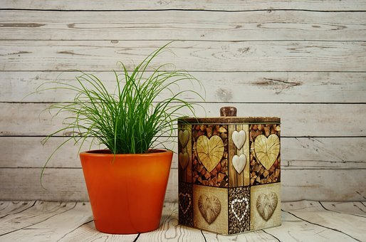 Flowerpot, Grass, Plant, Box, Storage, Tin Can, Vessel