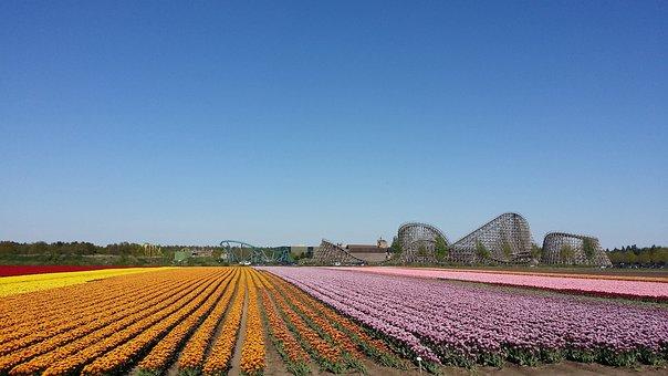 Flowers, Roller Coaster, Venlo
