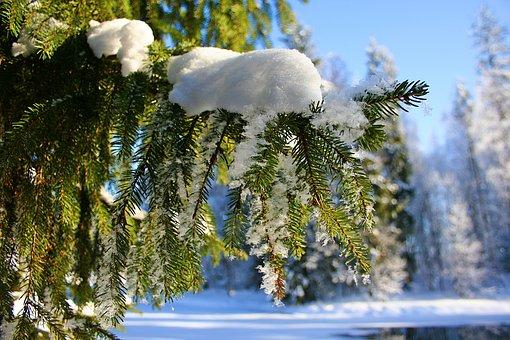 Nature, Beauty, Amazing, Park, Stroll, Russia, Gatchina