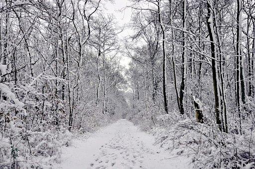 Winter Forest, Snow, Forest Running Tracks, Eringefeld