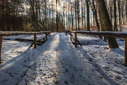 Winter Forest, Snow, Evening Sun, Winter, Wintry