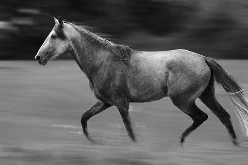 Horse, Nature, Free, Animal, Equine, Pre, Standard