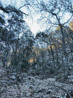 Woods, Forest, Sunset, Nature, Landscape, Tree, Summer