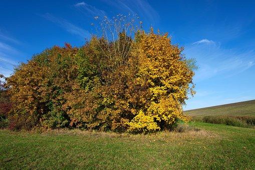 Autumn, At The Dike, Vojka