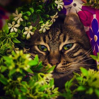 Tabby Cat, Istanbul, Cute, Pet, Kitty, Animals, Animal
