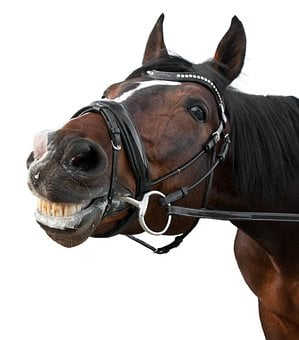 Horse, Smile, Content, White Background