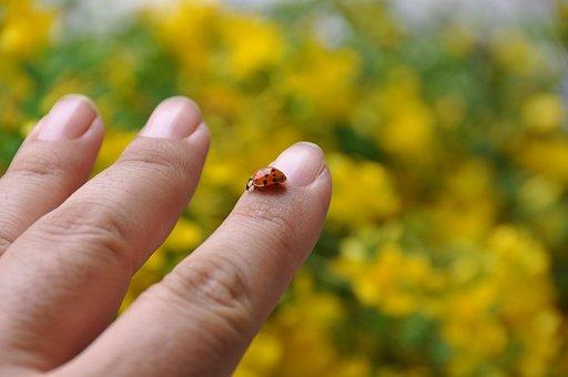 Ladybug, Yellow, Hand, Man, Unsect, Nature, Countyrside