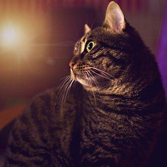 Cat, Tabby Cat, Istanbul, Scott, Animals, Cute, Animal
