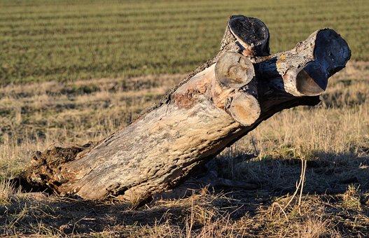 Tree Stump, Nature, Tree, Dead, Log, Morsch, Old, Wood