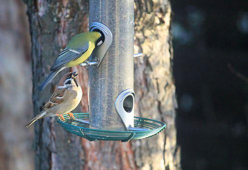 Birds, Sparrow, Blue Tit, Food, Treat Dispenser, Nature