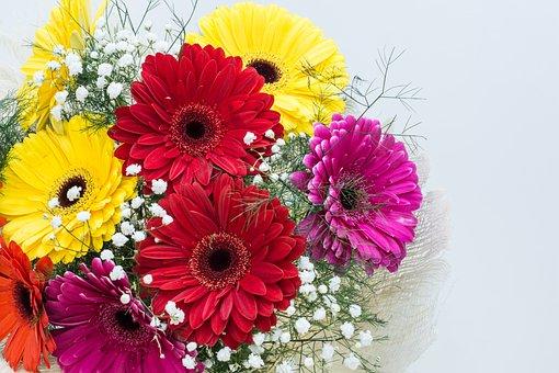 Flowers, Gerbera, Floral, Spring, Bloom, Daisy, Color