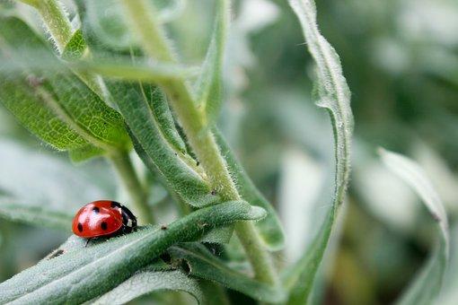 Ladybug, Polka Dots, Grass, Nature, Macro, Beetle