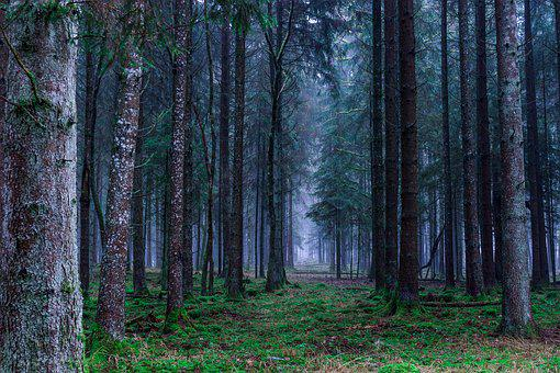 Forest, Landscape, Autumn, Trees, Germany, Nature, Mood