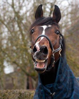 Horse, Neigh, Head, Animal