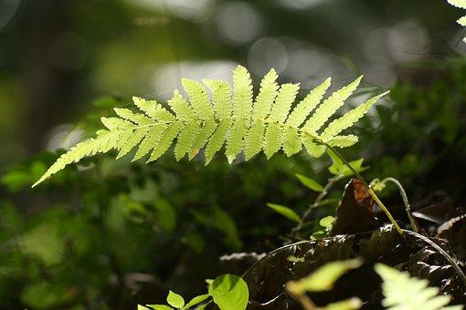 Fern, Plant, Nature, Leaf, Forest, Flora, Design, Green