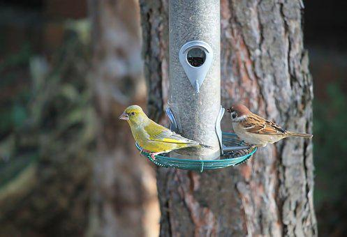 Birds, Sparrow, Tit, Food, Treat Dispenser, Nature