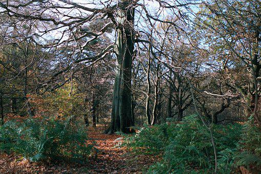 Tree, Forest, Woodland, Enchanted, Nature