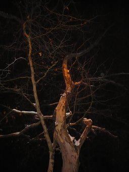 Wood, Winter, Night, Winter Picture, Nature