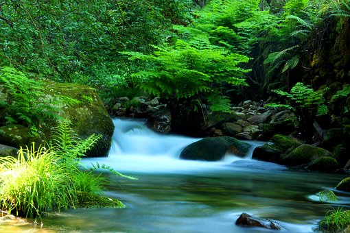 Agua, Autumn, Cascade, Sever, Cabreia, Vouga, Forest