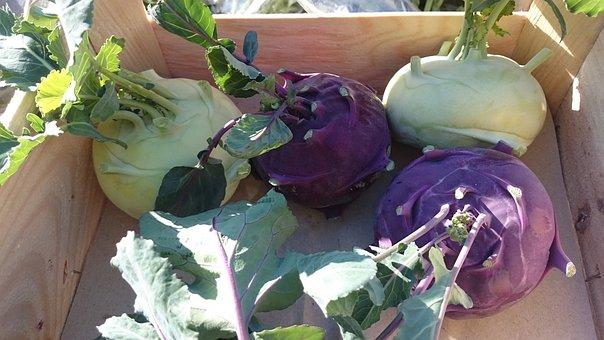 Cabbage Rave, Vegetables, Violet, Plant
