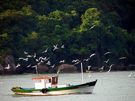 Boat, Fishing, Capixaba, Bay